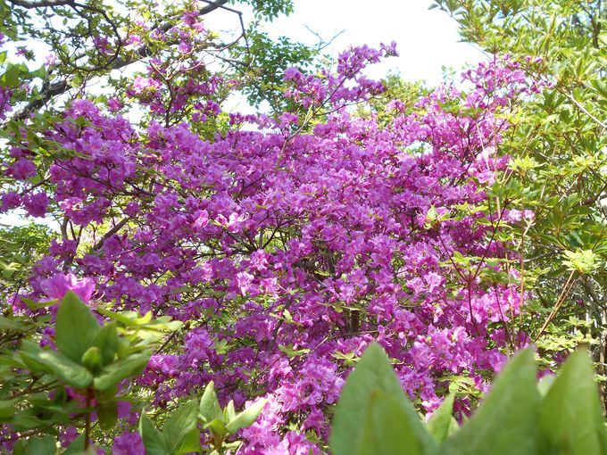 じっくり観察する価値がある!同じ花でも見比べができる楽しい花