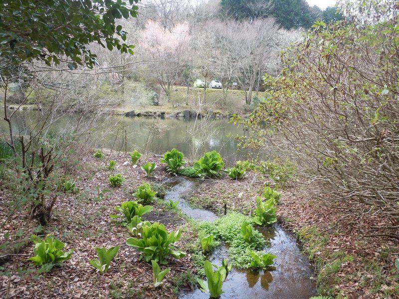 森の息吹を体感!静岡みずべ百選・函南町「原生の森公園」