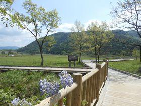 自然の宝庫!大分・阿蘇くじゅう国立公園「タデ原湿原」|大分県|トラベルjp<たびねす>
