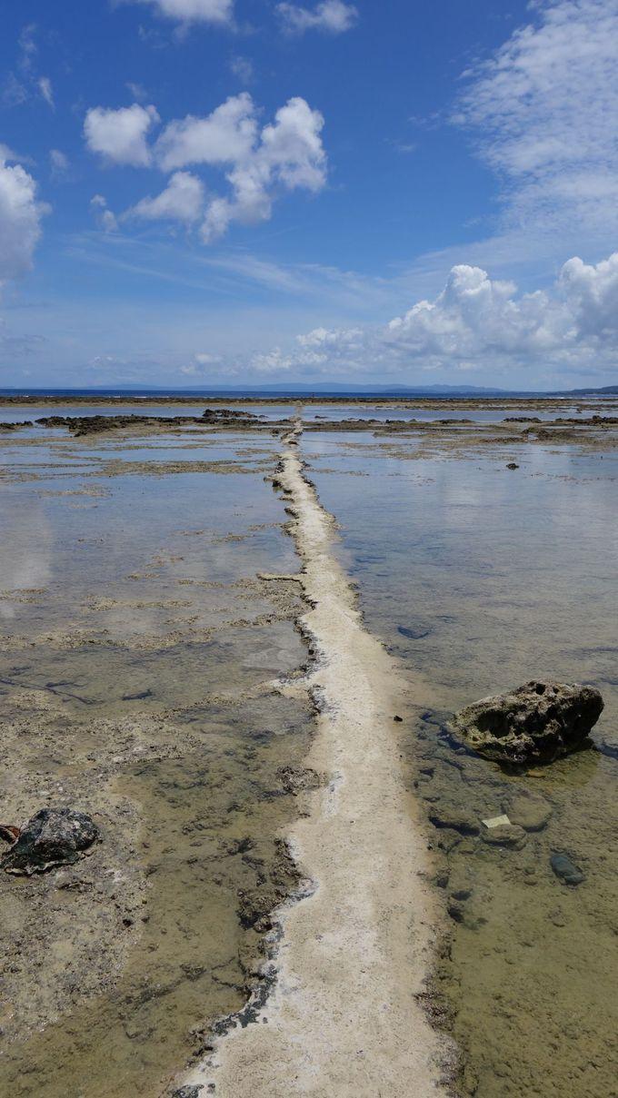 沖縄美ら海水族館から見えるあの島へ船で30分![伊江島]