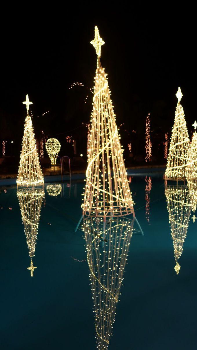 「ルミナスガーデン」の水に浮かぶ幻想的なツリーも必見☆彡