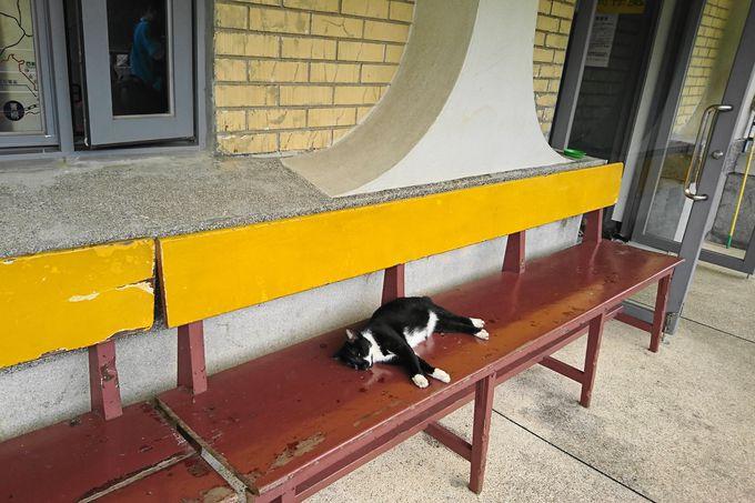 ホウトン駅を降りるなり猫ちゃんが!