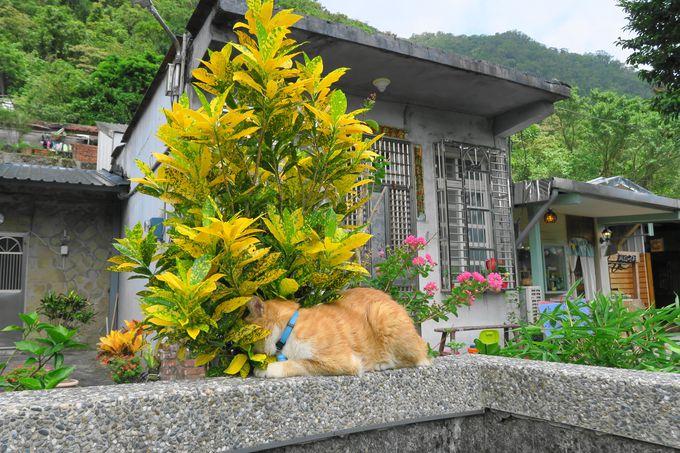 のどかな風景と猫ちゃんに癒やされる