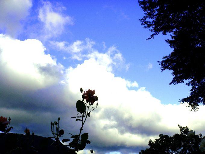 「強羅公園」&「星の王子さまミュージアム」でサン=テグジュペリの愛するバラ、コンスエロを探して!
