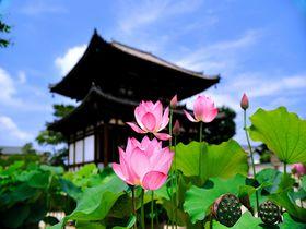 奈良ロータスロードの出発地!美し過ぎる古都の蓮寺『喜光寺』