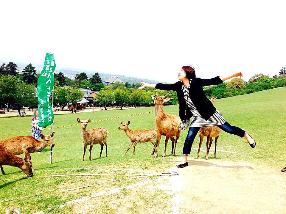 鹿せんべい飛ばし大会も楽しめる癒しスポット「若草山」