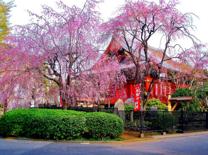 〈早朝お花見を楽しむポイント4〉時間を有効活用して上野公園を満喫しよう!