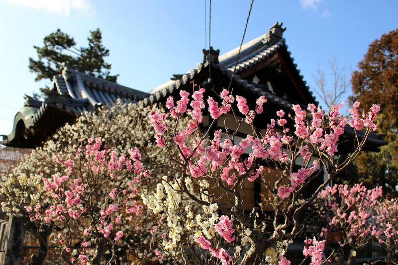 穴場の梅の名所は日本最古の天満宮!奈良「菅原天満宮」は合格祈願の御利益抜群