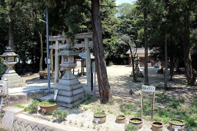 平成29年は「忍性菩薩」生誕800年!太子道の歴史ロマン