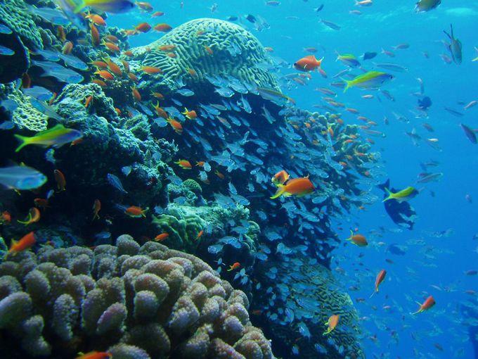 珊瑚畑と色鮮やかな熱帯魚が舞う癒しのポイントも!