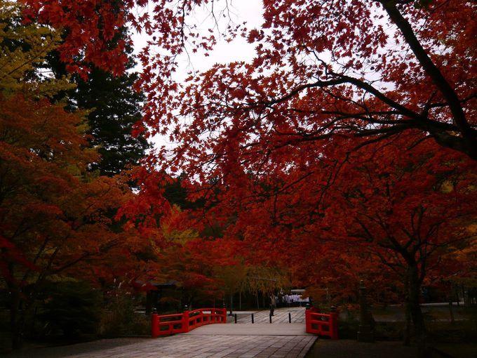 高野山で、艶やかな紅葉を心ゆくまで楽しむ