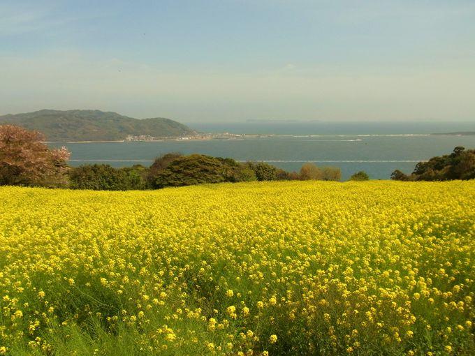 四季折々の花が美しい福岡市の離島「能古島」