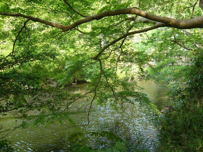 大原三千院の、新緑眩い聚碧園