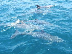 てんこ盛り海鮮丼&親子の野生イルカに会いに天草「海鮮蔵」へ!
