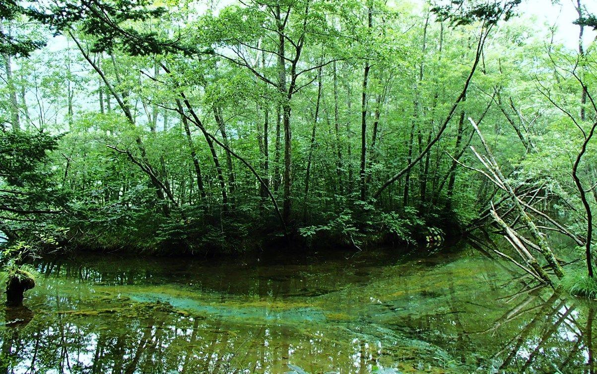 歩きながら出会う森の癒し