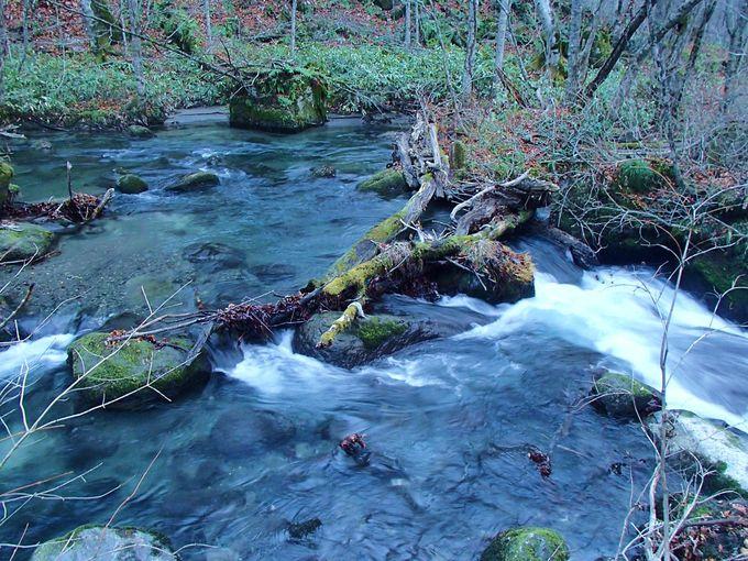 静かな朝、森と渓流に守られた幻想的なホテルの庭を散策
