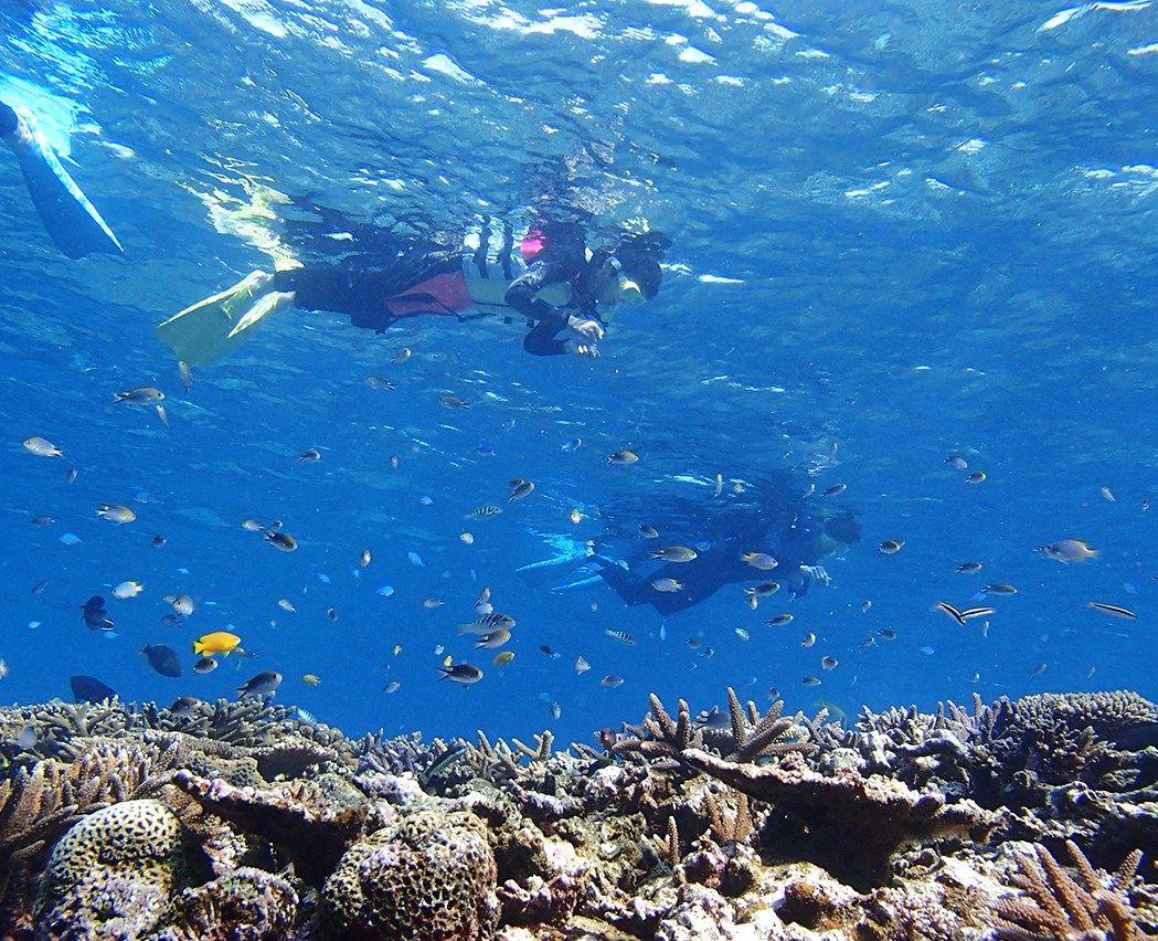 海開き期間以外も一年中楽しめる、魅力あるマリンアクティビティー