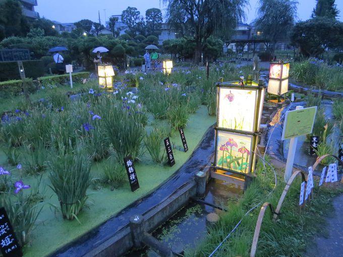 花菖蒲の見ごろは6月「菖蒲祭り」