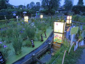 東京・葛飾 堀切菖蒲園 〜江戸の粋〜「あなたを信じています」