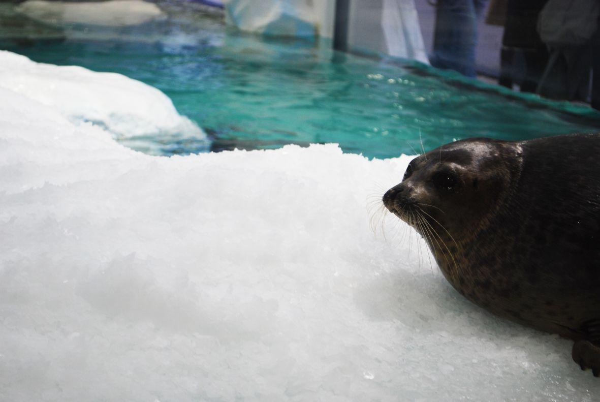 世界最大級の水槽でジンベイザメに癒される「海遊館」