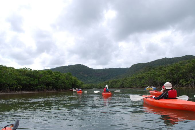 カヌーに乗って、いざ!マングローブの川へ