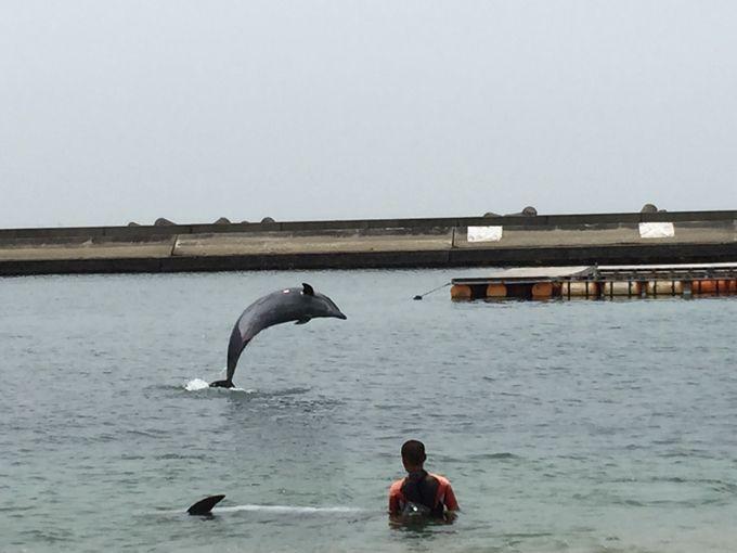 夏休みにはイルカに会える!都心のオアシス「須磨海水浴場」