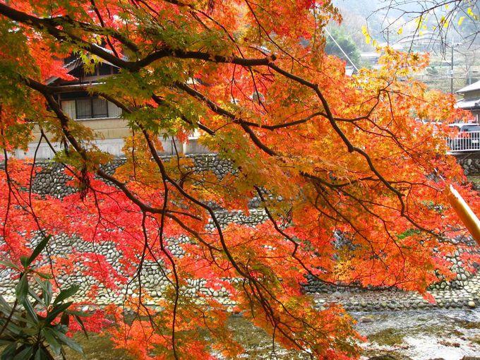 室生川に枝垂れる紅葉