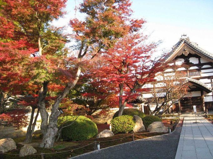 朝の高台寺