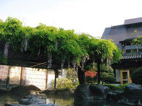 猿が見つけた!?猿ヶ京温泉|群馬県|トラベルjp<たびねす>