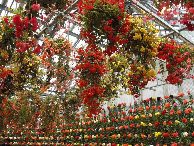 「アンデスの花園」ベコニアガーデン