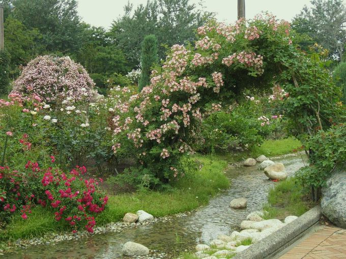 バラが咲き乱れるイングリッシュガーデン