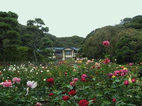 鎌倉文学館でバラも楽しんだら、海沿いのカフェへ|神奈川県|トラベルjp<たびねす>