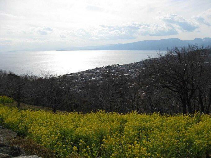 季節の花々も美しい吾妻山
