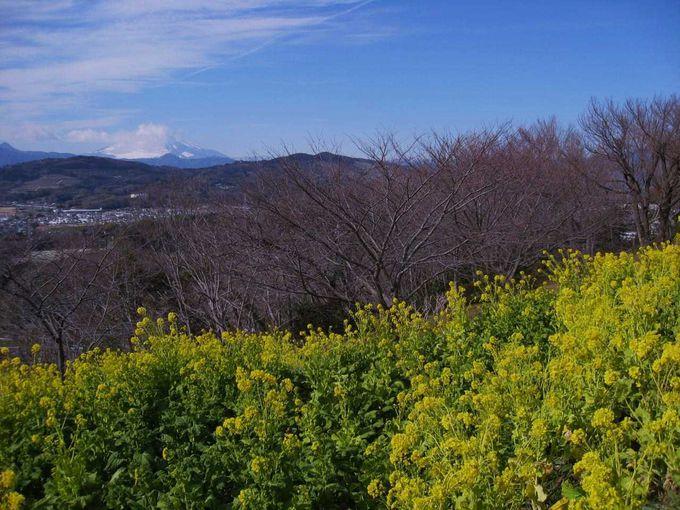 富士山と菜の花の絶景