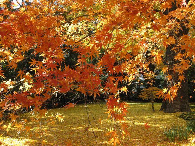 赤と黄のグラデーションが美しい都会のオアシス「新宿御苑」