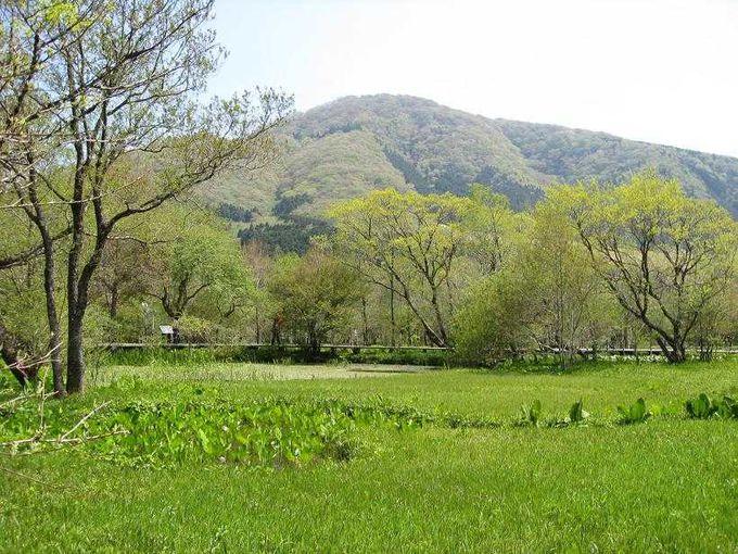 湿地に咲く可憐な植物を愛でる「箱根湿生花園」