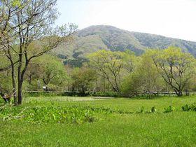 新緑も美しい仙石原で、湿地に咲く可憐な植物を愛でる「箱根湿生花園」