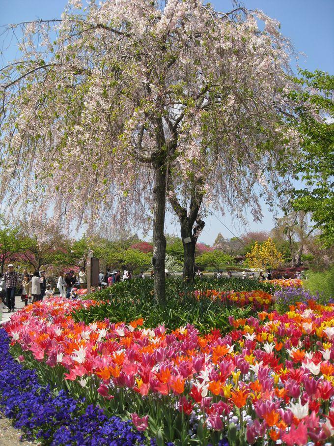 ベゴニアガーデンやチューリップも美しい!植物園でもある「なばなの里」