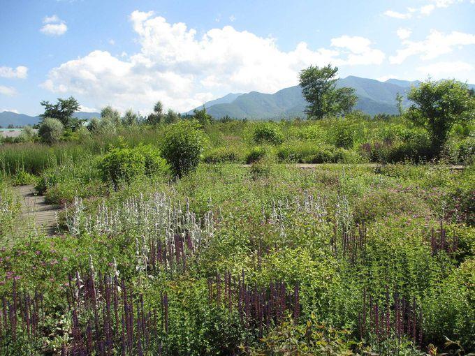 野の花のカーペットも見られるメドウガーデン