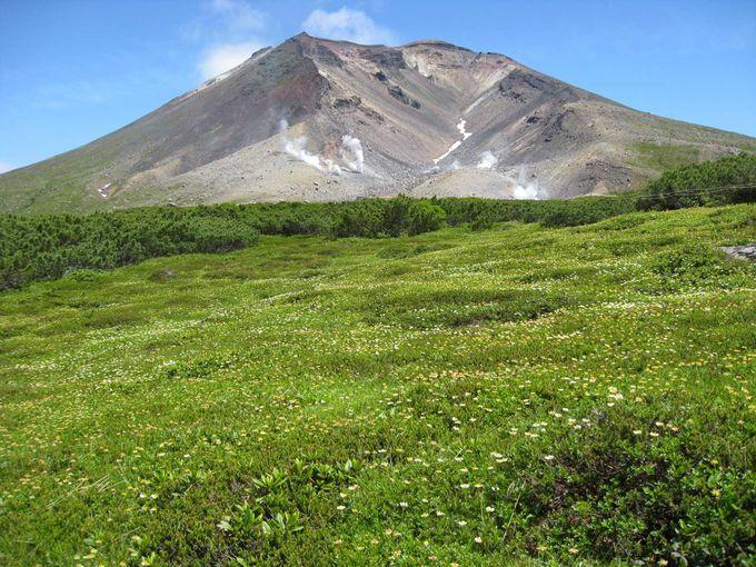 日本一が多い旭岳