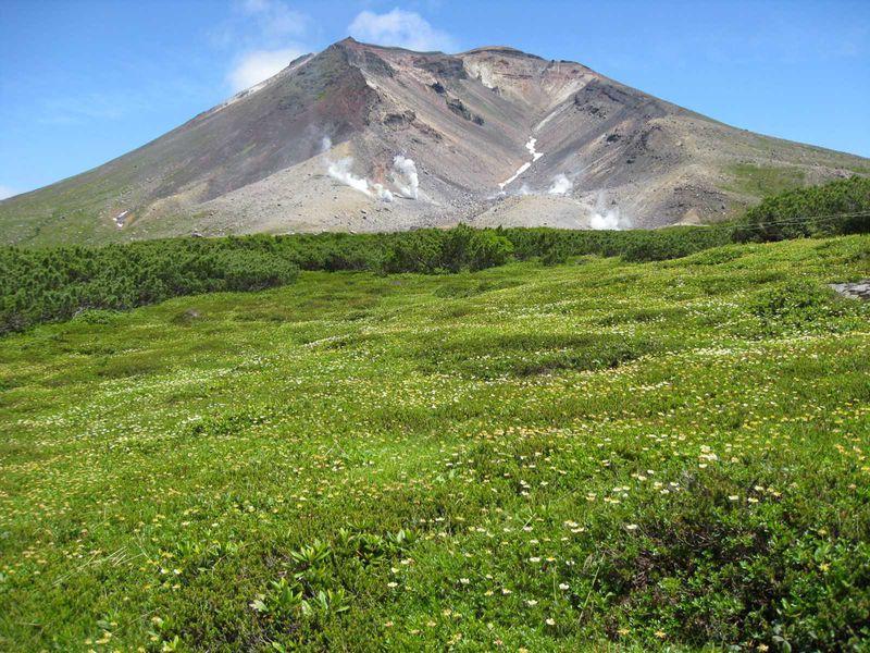 天空のお花畑に感動「大雪山旭岳」
