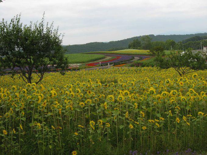 絶景の花畑