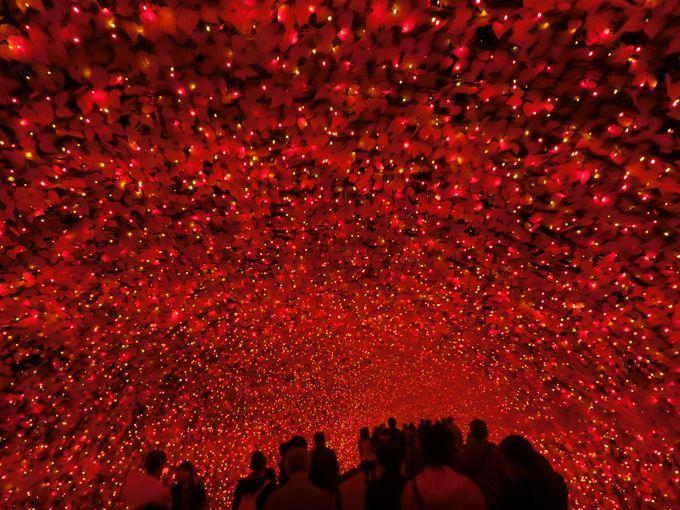 秋色の光のトンネル