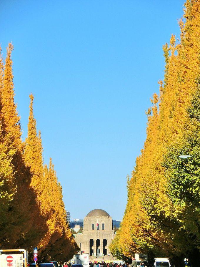 眩しいほどの黄金色に染まる「明治神宮外苑」のいちょう並木