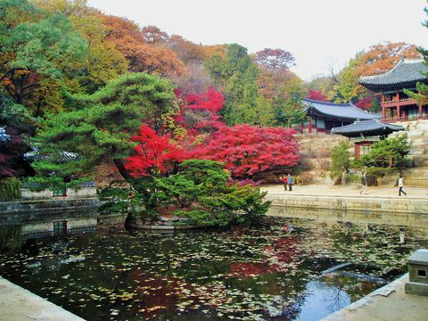 韓国の世界遺産「昌徳宮」で歴史探訪