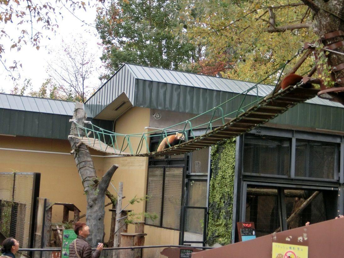アイディア展示が秀逸「旭山動物園」は大人も子供も楽しい!