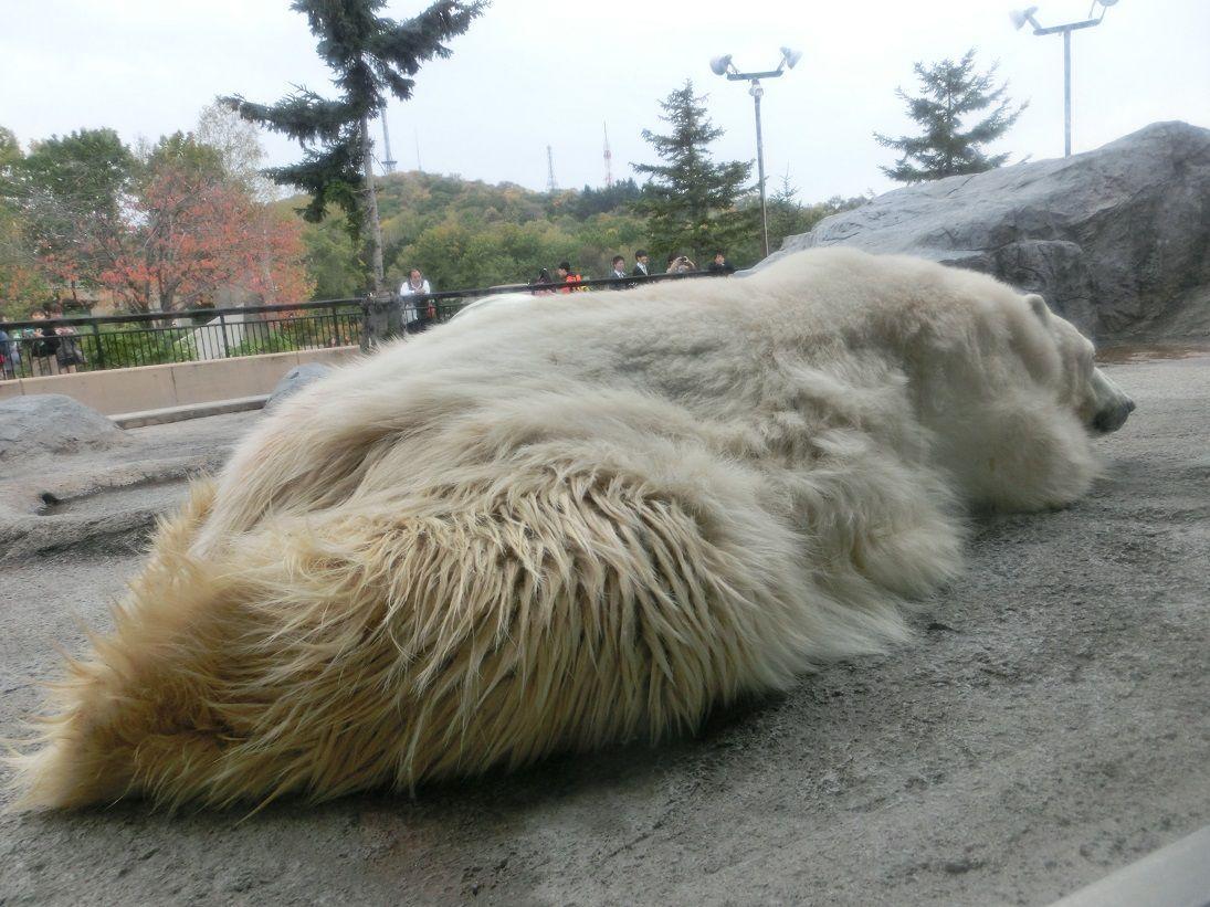 大人でも楽しめるポイントはここ!旭川「旭山動物園」人気の秘密