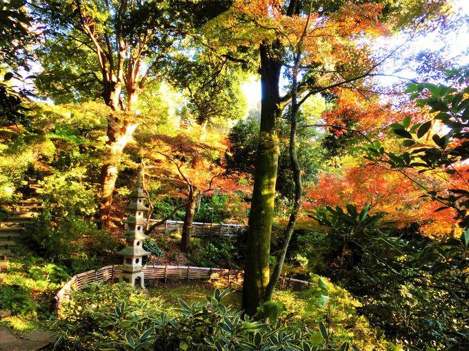 世田谷にある穴場の紅葉名所「五島美術館」の庭園が美しい!