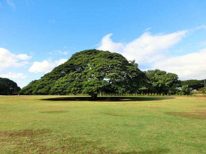 CMで有名なこの木なんの木?