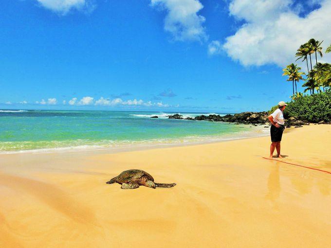 海ガメがお昼寝をするラニアケア・ビーチ
